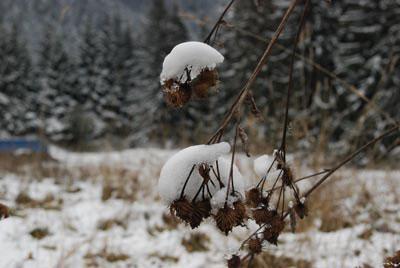 Iarna a luat toamna prin surprindere