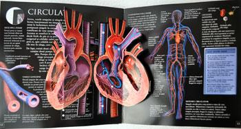 Cum functioneaza corpul meu. Editura Teora