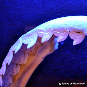 Expozitie de rechini vii