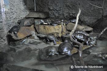 Acvariul din Constanta