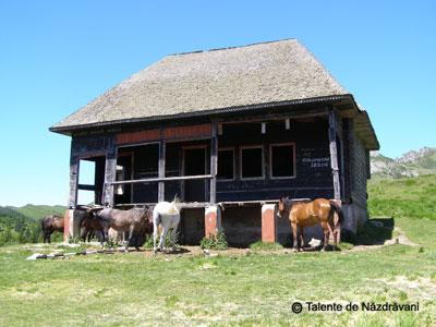 Cabana Ciucas