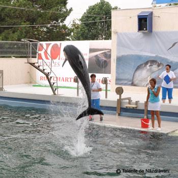 Pei Pei, Nini si Chen Chen, noii delfini de la delfinariul din Constanta