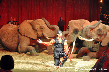 Festivalul International de Arta a Circului: Suedia, Circul Scott