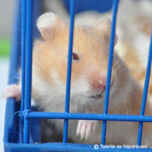 Mali, hamsterul nostru