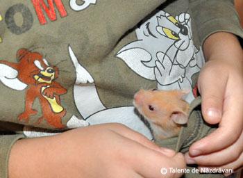 Hamster sirian la somn