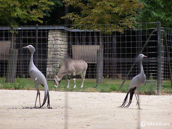 Gradina zoologica Vincennes