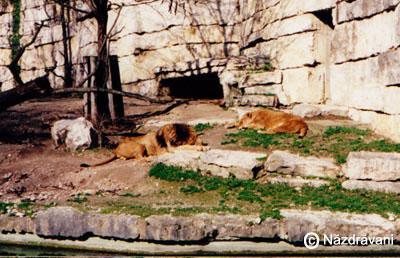 Gradina zoologica Lyon