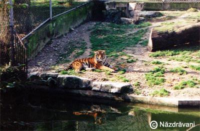 Un alt fel de Zoo...