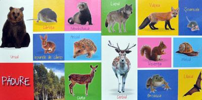 Primele 100 de animale, Editura Gama