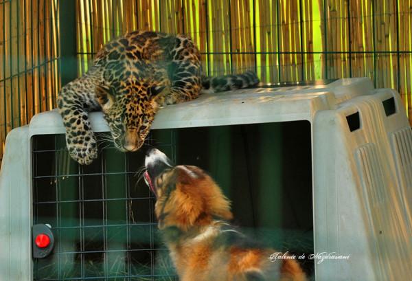zoo2014sibiu