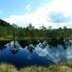 Tinovul Mohoș - rezervație naturală la Sf. Ana