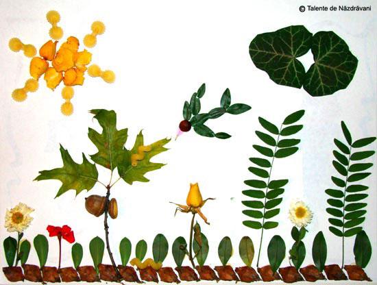 Alexandra, colaj din frunze si flori de toamna